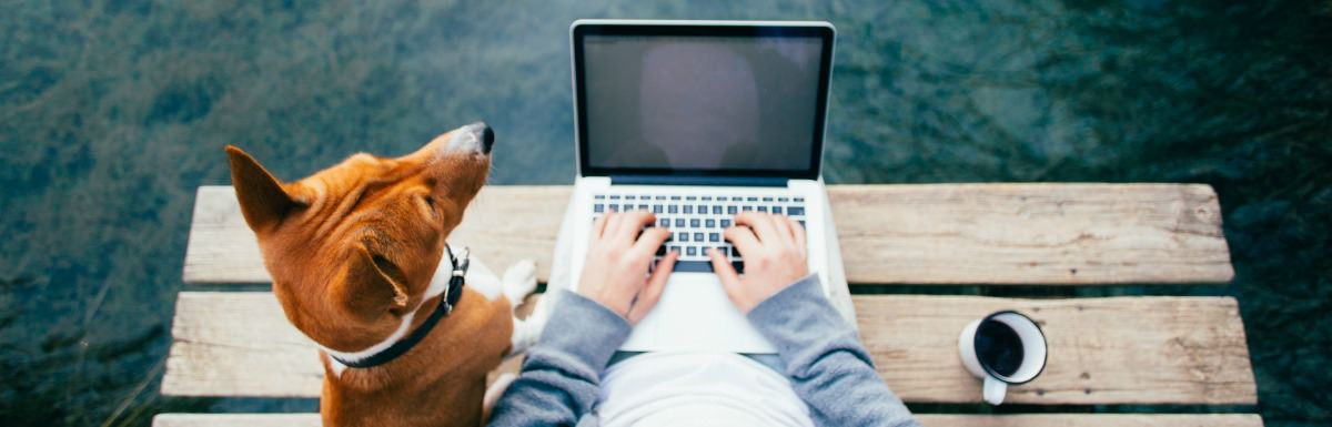 Why Pet Bloggers Should Care About SEO